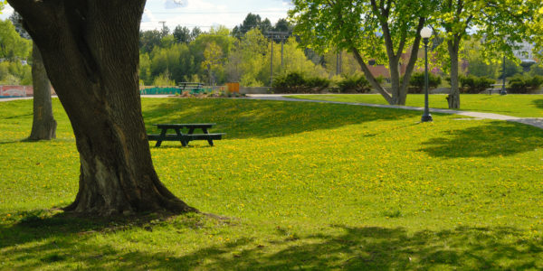 City park summer view with trees, green grass with yellow dandelions, benches and table for resting